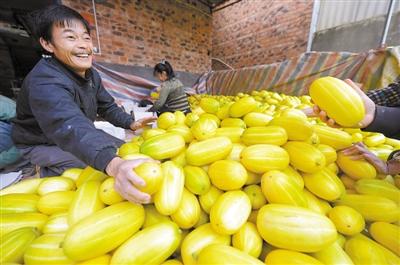 西乡塘区双定甜瓜日售几十吨