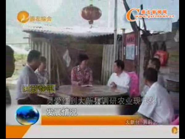 大新:吴爱红到大新县调研农业现代化发展情况