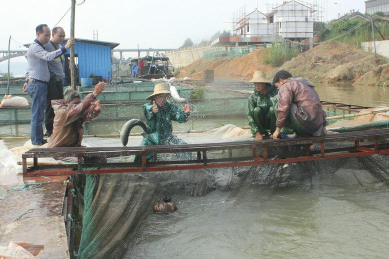 [藤 县]依托西江黄金水道打造百里生态渔场