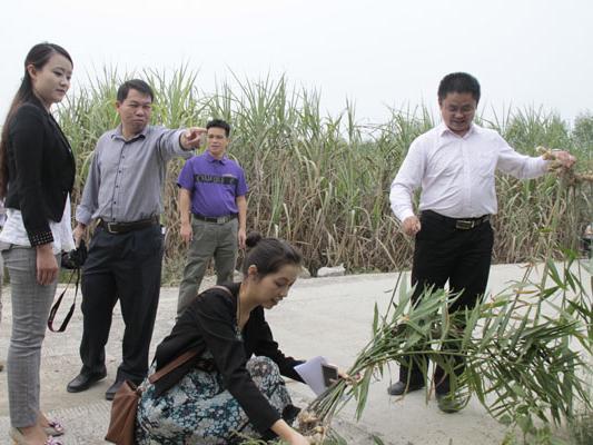 促进会副秘书长陈琳带队到兴宾区农业科技示范带调研