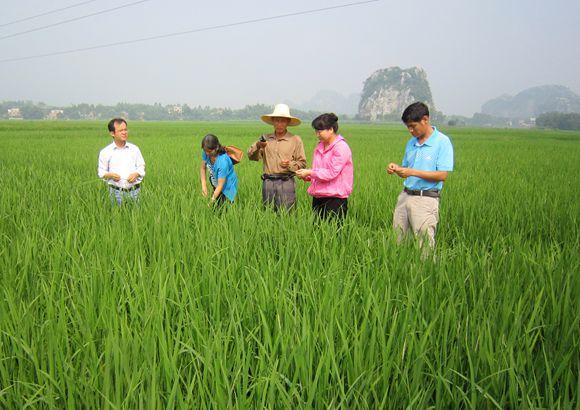 八步区农业局工作组到铺门镇指导晚稻中期田间管理工作