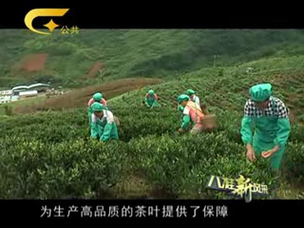会员单位:恭城议嵘茗香茶源有限公司