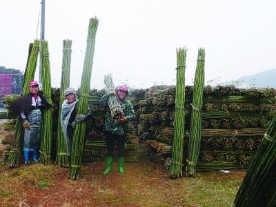 全州县东山瑶族乡发展竹林经济