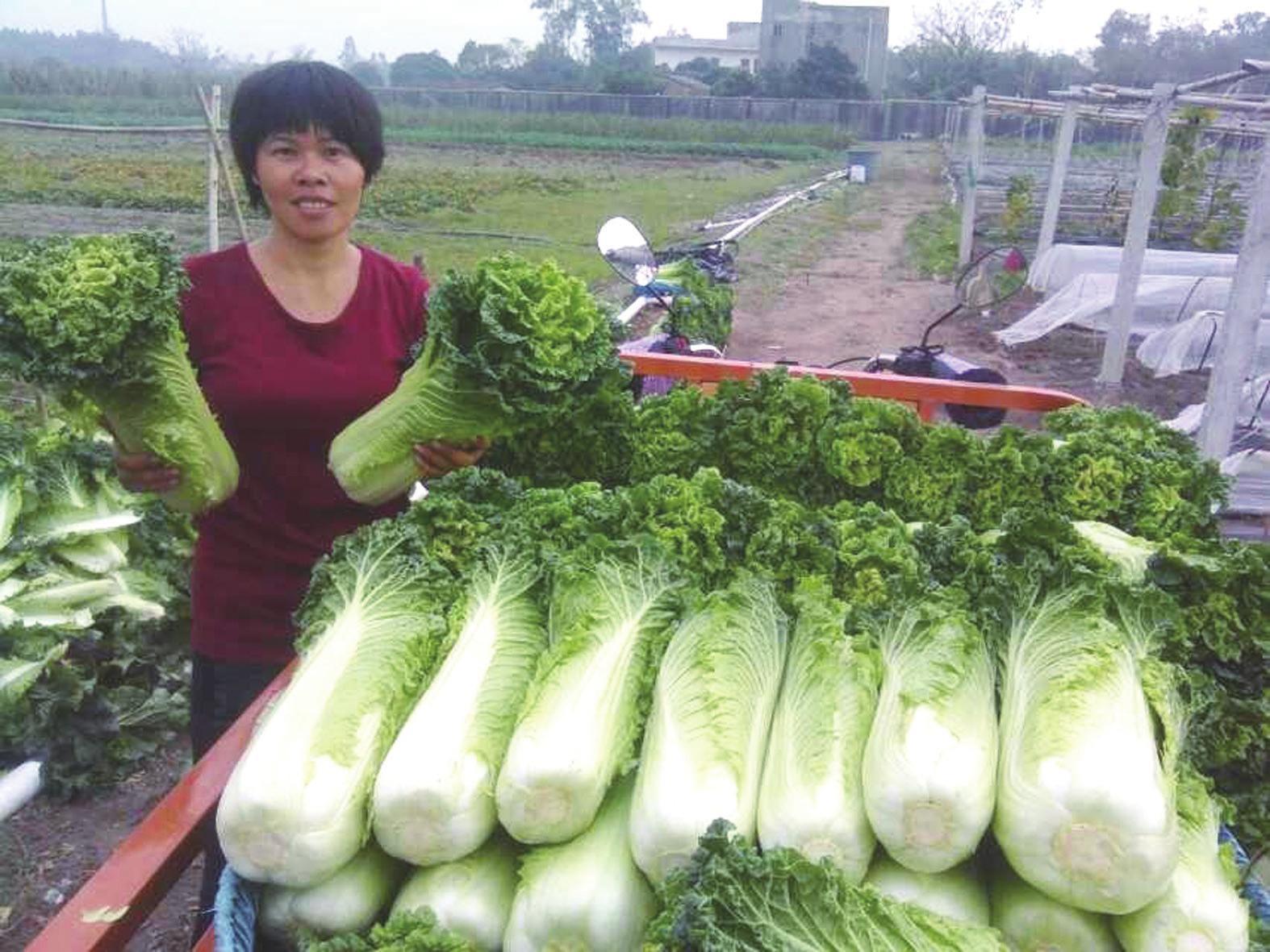 """银海区:平价蔬菜进超市 """"农超对接""""获多赢"""