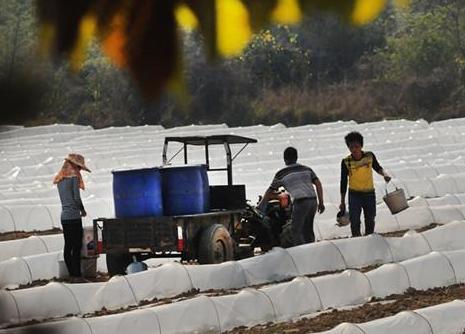 上思县农业部门推广塑料大棚、覆盖农膜等农业技术防寒