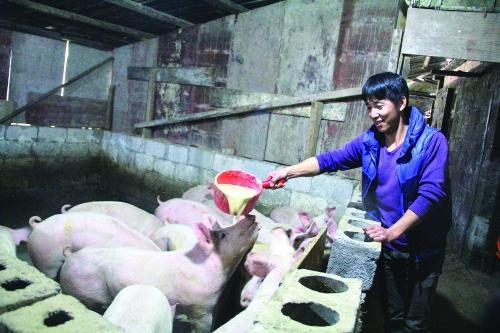 龙胜县一个贫困村的另类发展之路