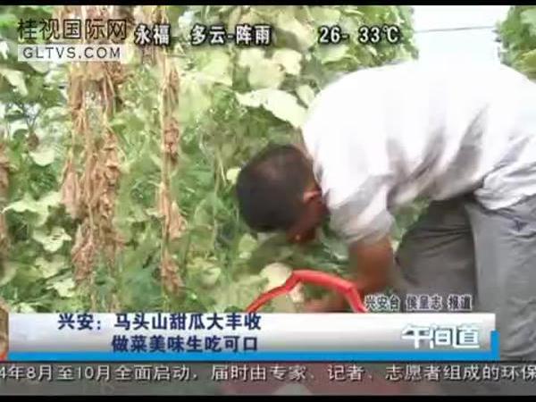 兴安:马头山甜瓜大丰收 做菜美味生吃可口