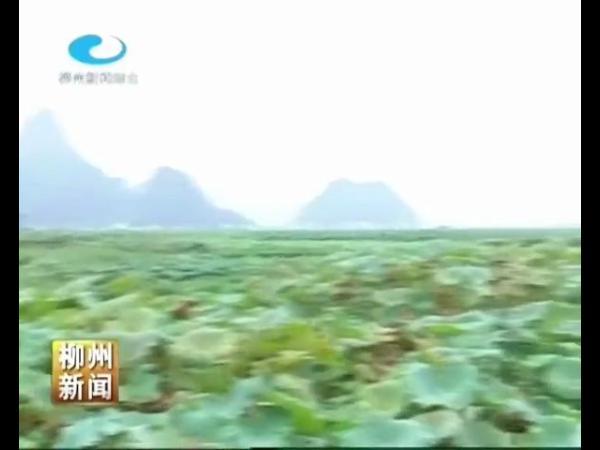 柳江县:大力创建示范区 推进农业现代化