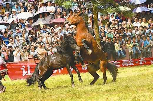 芦笙斗马引客十多万