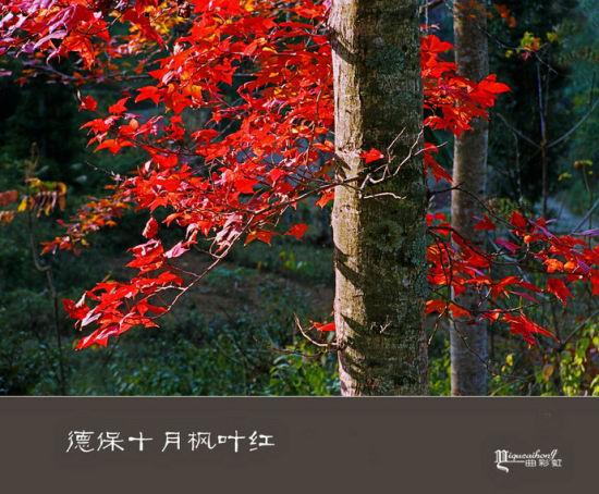 """体验秋之""""德保""""红叶森林公园"""