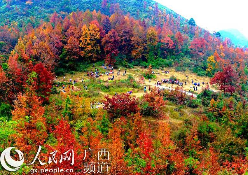 2014年广西宜州屏南枫叶节11月29日开幕