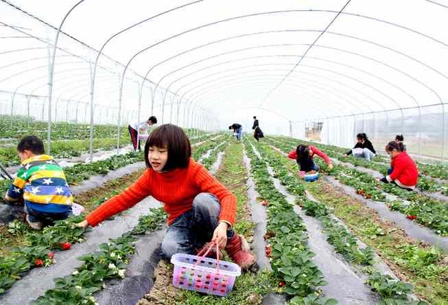 阳朔福利镇大力发展无公害种植产业
