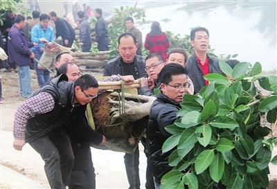 """武宣县:""""四百""""行动促生态乡村升级"""