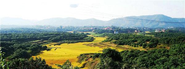 钦北区新棠镇