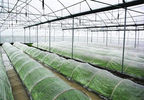 灵川县潭下镇薛家村25元1斤的大米是如何种出来的?