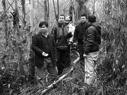 """[武宣县]政策性森林保险""""试水"""" 一只鸡换回一头牛"""