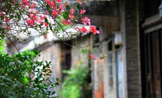 自驾游杨美、芦圩古镇 那些自由自在的时光