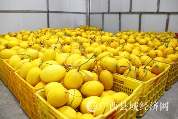 富川现代特色农业核心示范区初显助推效应
