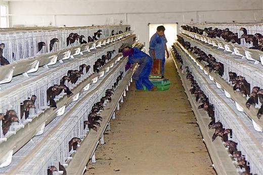 生态养殖八桂兴 水产畜牧大转型