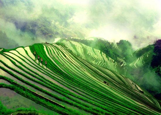 龙脊梯田: 每个季节都有不一样的美景