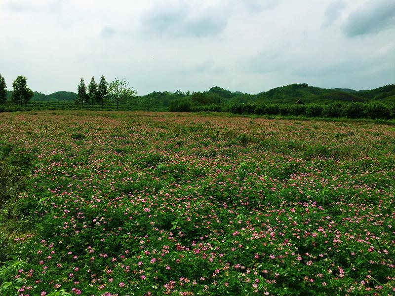 鹿寨县寨沙镇