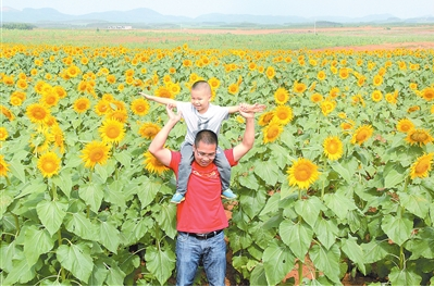 """兴宾区调整农业产业结构""""兴农富农""""报道之正龙乡:特色农业引客来"""