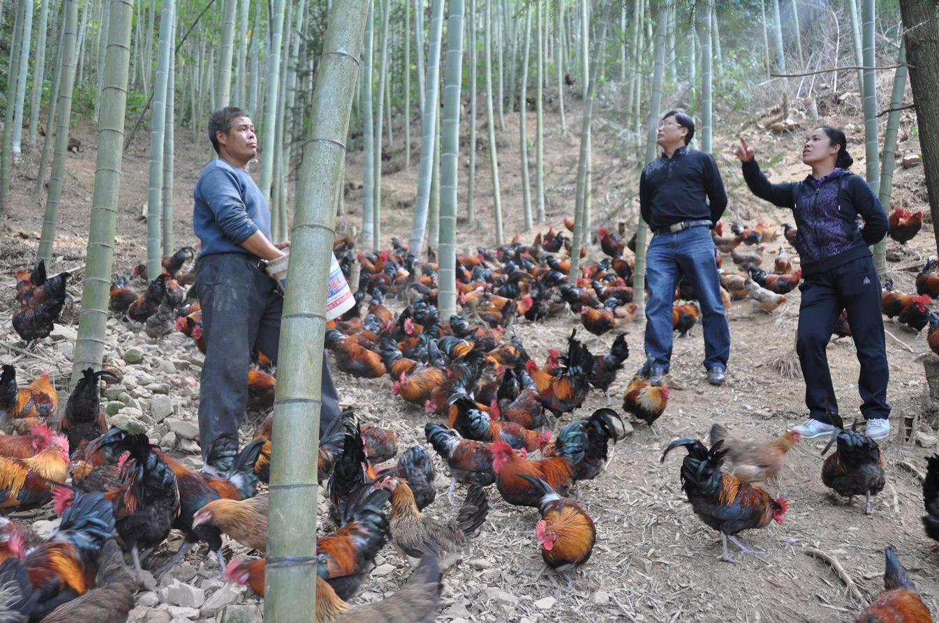 三江侗族自治县和平乡
