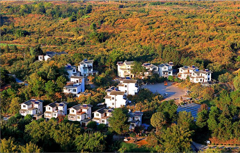 """广西把美丽乡村计划,细分为""""清洁乡村""""、""""生态乡村""""、""""宜居乡村""""和""""幸福乡村""""等几个环节,图为生态乡村村屯绿化工程示范点新风貌。"""