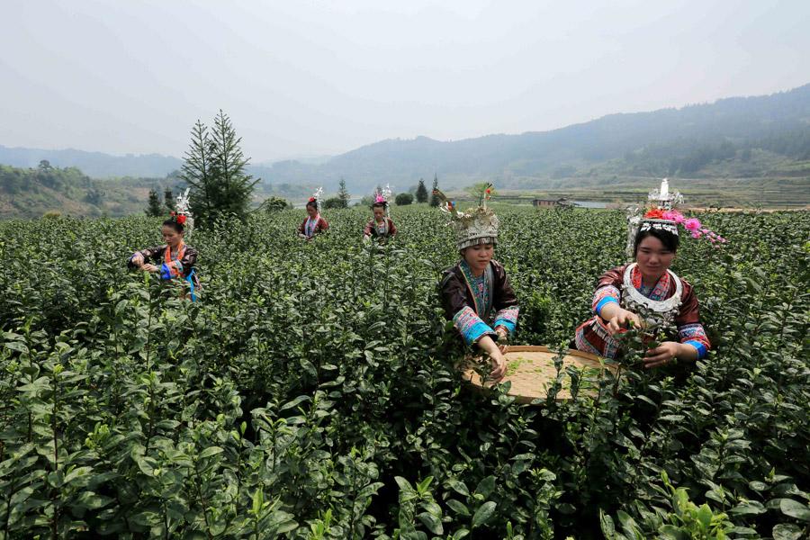 三江侗族自治县梅林乡