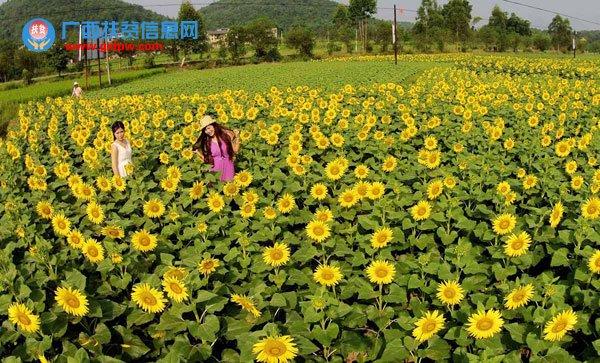 融安县大良镇