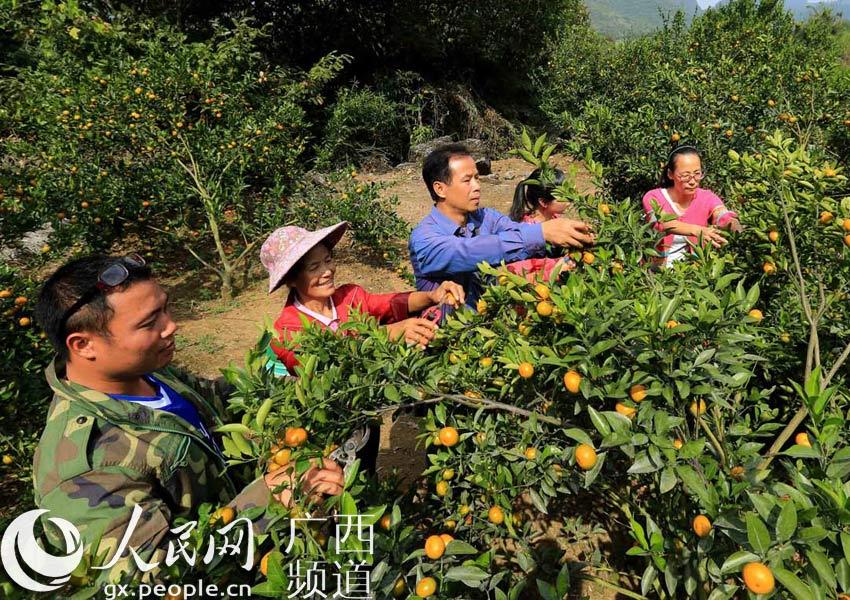 10月23日,游客在广西柳州市融安县沙子乡沙子村