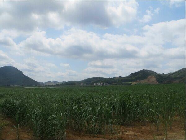 """平山镇""""双高""""基地景观"""