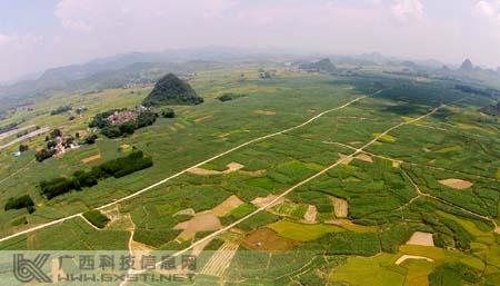 融安县潭头乡推广甘蔗种植新技术运用