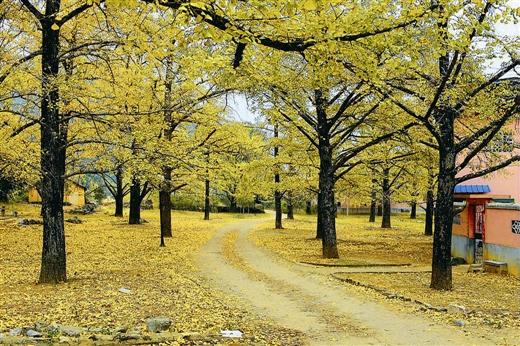 寻找广西最美的秋天