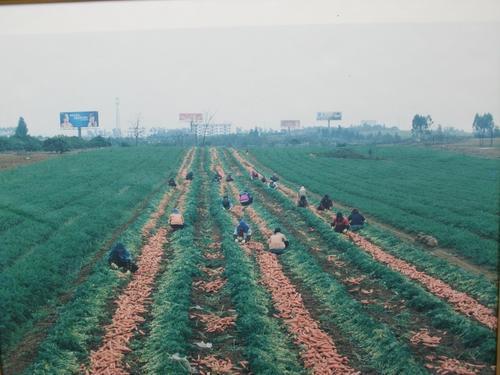 宾阳县王灵镇