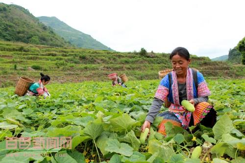 隆林县猪场乡