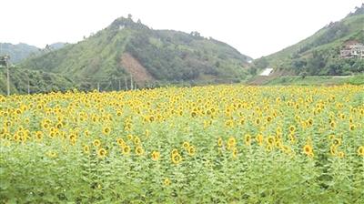 那坡县德隆乡