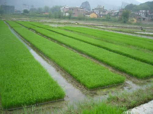 宜州市福龙瑶族乡