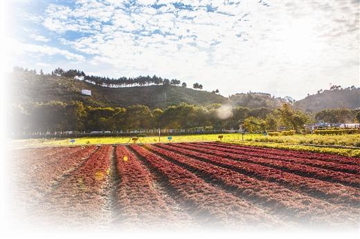 巴马坡纳德米特农场新型农耕旅游文化雏形初现