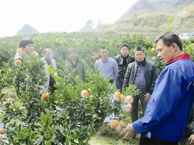 2014年广西农业产业结构