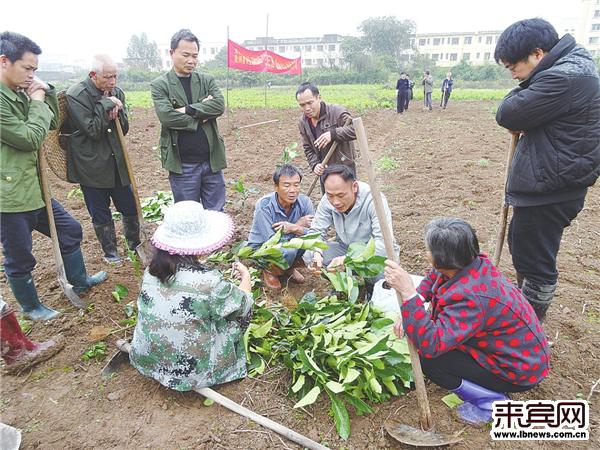"""忻城县""""十三五""""开局之年精准扶贫看点多:今年如何减少2万贫困人口?"""