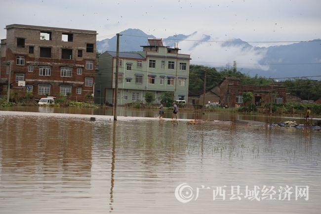 5月6日,文圩镇何村村被淹农田和房屋_副本.jpg