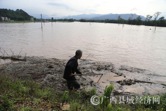 5月6日,西河镇水秀村大片农田成为一片泽国_副本.jpg