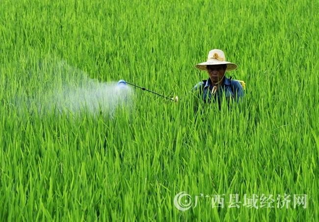 罗城:强降雨11乡镇农作物受灾面积44490亩