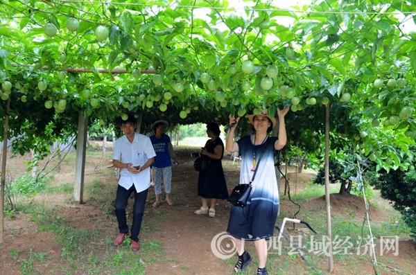 合浦:休闲游农庄 赏花又品果