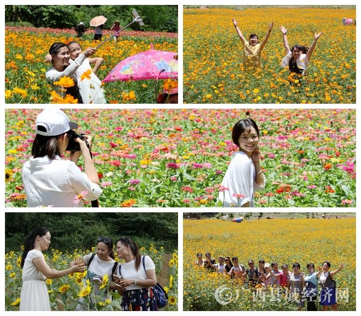 [大新县]花为媒 乡村旅游趋热
