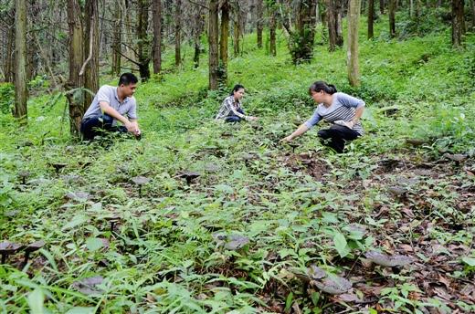 [八步区]大桂山林场林下经济转型发展纪实