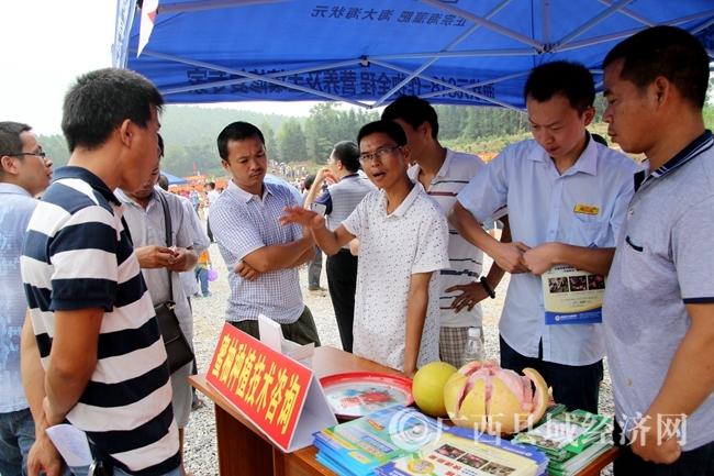 农户在现场咨询红心柚种植技术_副本