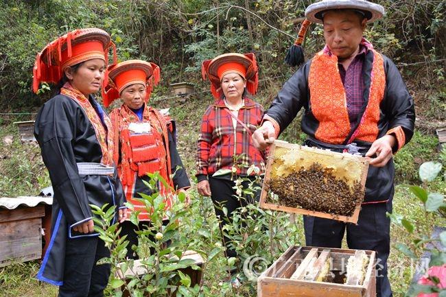 金秀:生态养蜂拓宽瑶胞脱贫致富路