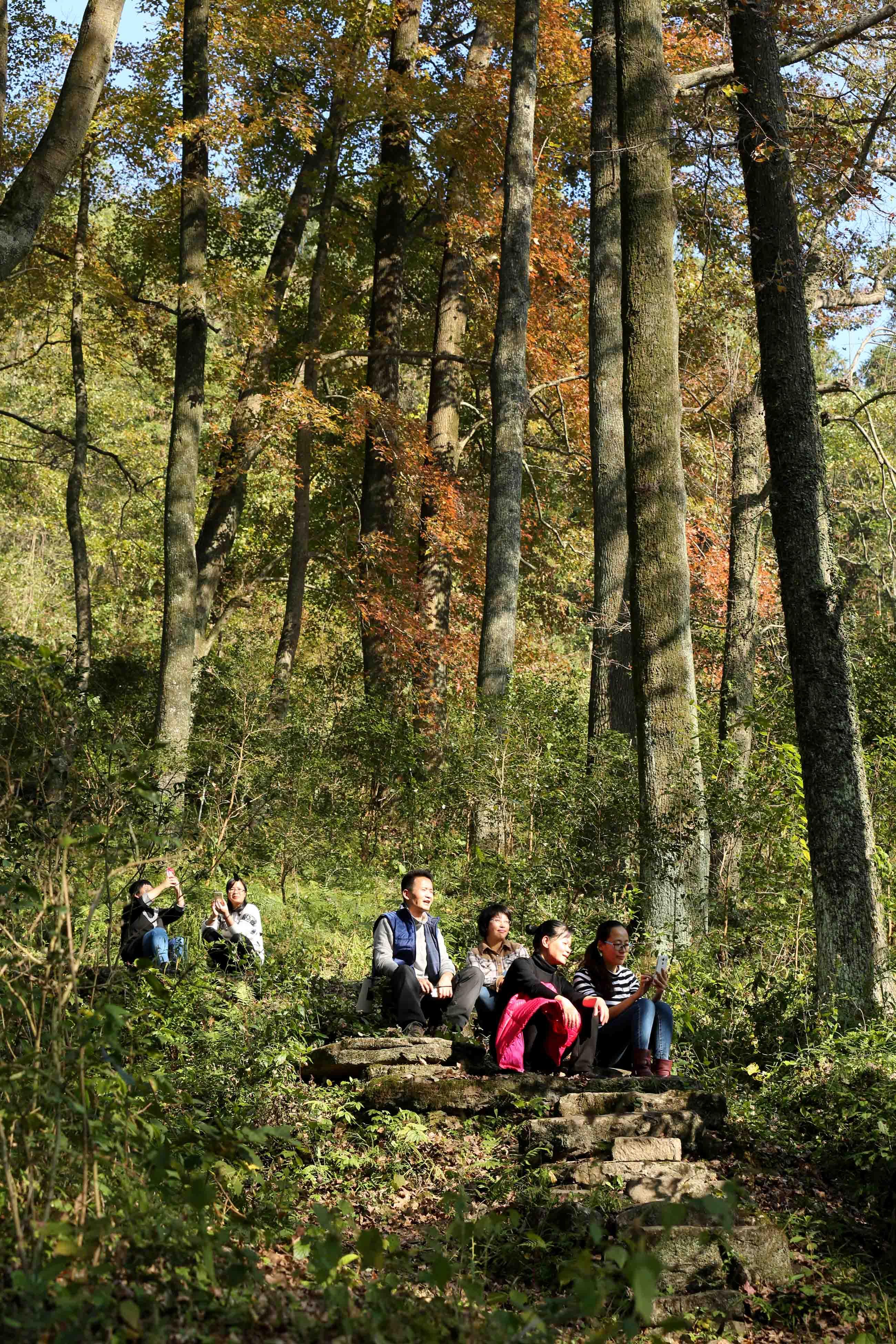 图1:12月9日,游客在广西柳州市融安县东起乡乐岗屯观赏枫叶。(谭凯兴 摄)